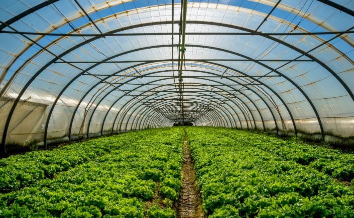 Kertészeti üzemek korszerűsítése